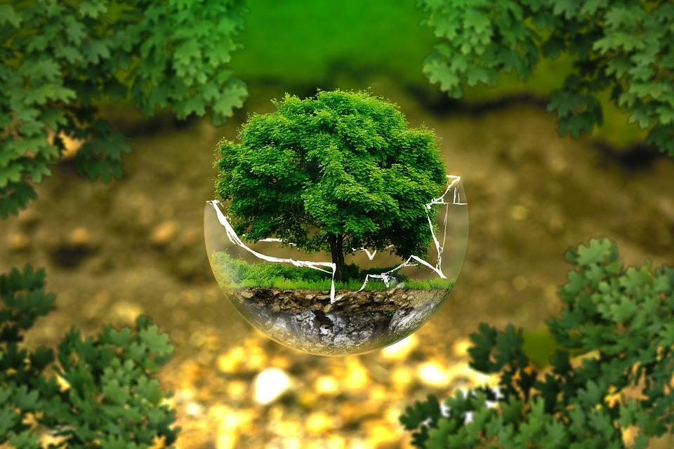 Laudato si': le Vatican réaffirme son engagement écologique